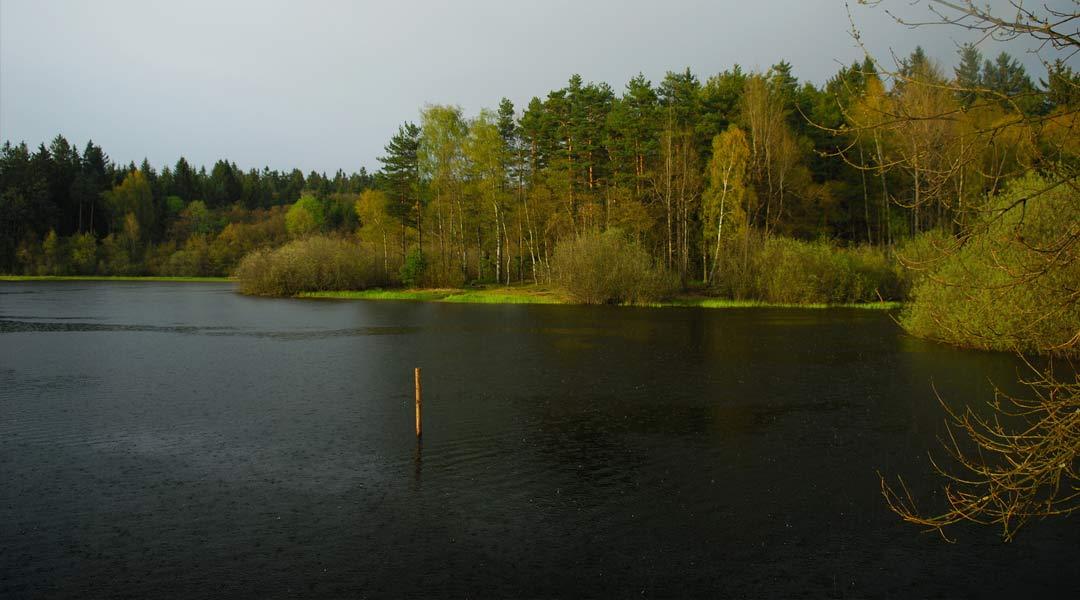 Teich am Graselweg